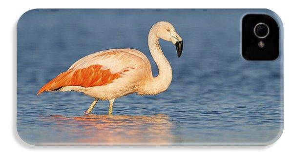 Chilean Flamingo IPhone 4 / 4s Case by Ronald Kamphius