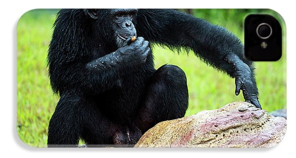 Chimpanzees IPhone 4 / 4s Case by Pan Xunbin