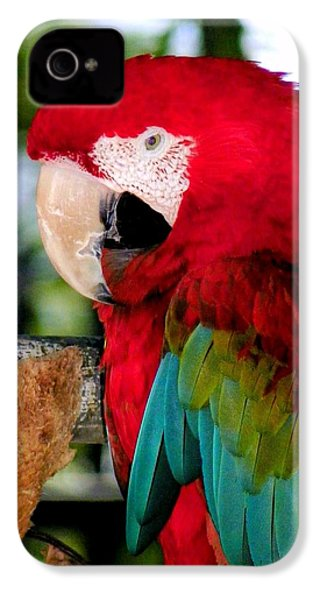 Chowtime IPhone 4 / 4s Case by Karen Wiles