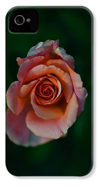 Close-up Of A Pink Rose, Beverly Hills IPhone 4 / 4s Case by Panoramic Images