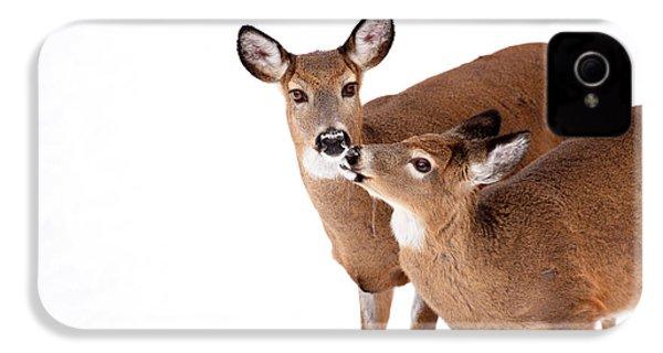 Deer Kisses IPhone 4 / 4s Case by Karol Livote