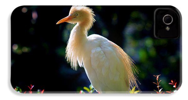 Egret With Back Lighting IPhone 4 / 4s Case by Zoe Ferrie