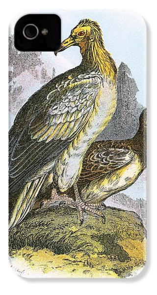 Egyptian Vulture IPhone 4 / 4s Case by English School