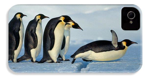 Emperor Penguin Aptenodytes Forsteri IPhone 4 / 4s Case by Hans Reinhard