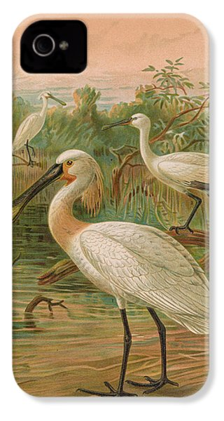 Eurasian Spoonbill IPhone 4 / 4s Case by J G Keulemans