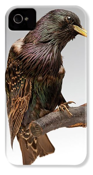 European Starling IPhone 4 / 4s Case by Ucl, Grant Museum Of Zoology