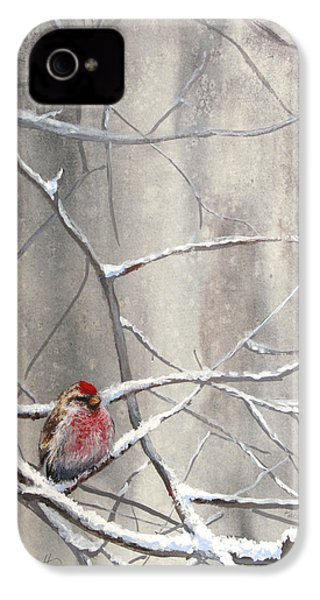 Eyeing The Feeder Alaskan Redpoll In Winter IPhone 4 / 4s Case by Karen Whitworth