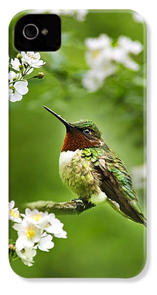 Fauna And Flora - Hummingbird With Flowers IPhone 4 / 4s Case by Christina Rollo