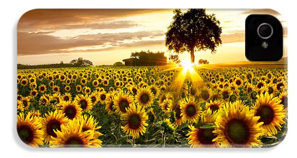 Fields Of Gold IPhone 4 / 4s Case by Debra and Dave Vanderlaan