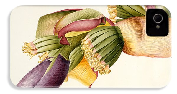 Flower Of The Banana Tree  IPhone 4 / 4s Case by Georg Dionysius Ehret