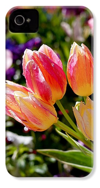 Fresh Tulips IPhone 4 / 4s Case by Rona Black
