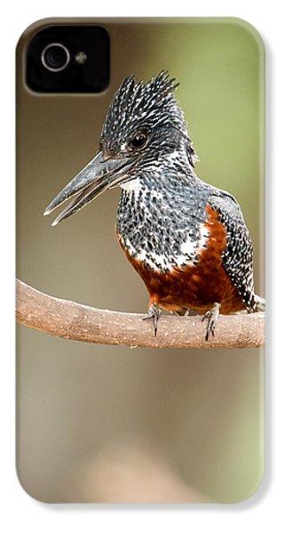 Giant Kingfisher Megaceryle Maxima IPhone 4 / 4s Case by Panoramic Images