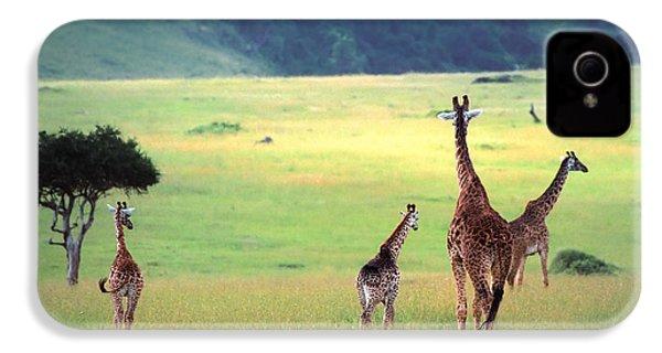 Giraffe IPhone 4 / 4s Case by Sebastian Musial