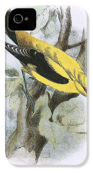 Golden Oriole IPhone 4 / 4s Case by English School