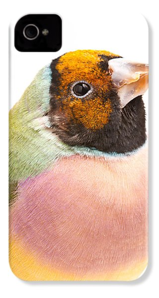 Gouldian Finch Erythrura Gouldiae IPhone 4 / 4s Case by David Kenny