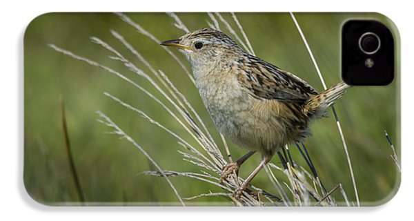 Grass Wren IPhone 4 / 4s Case by John Shaw