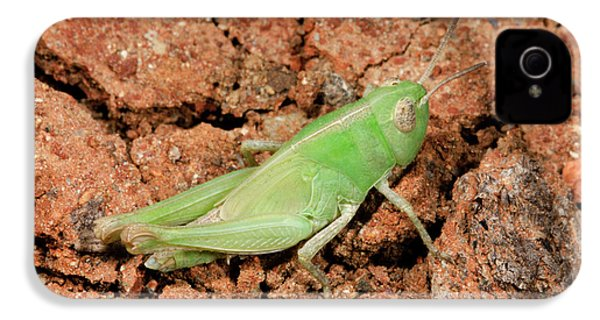 Grasshopper Aiolopus Strepens Nymph IPhone 4 / 4s Case by Nigel Downer
