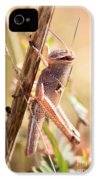 Grasshopper In The Marsh IPhone 4 / 4s Case by Carol Groenen