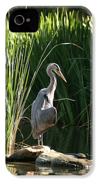 Great Blue Heron IPhone 4 / 4s Case by Ellen Henneke
