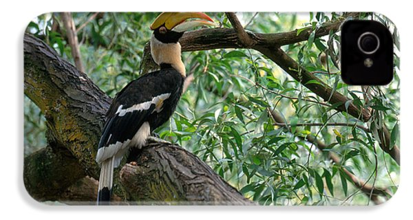 Great Indian Hornbill IPhone 4 / 4s Case by Art Wolfe