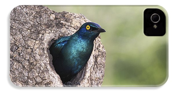 Greater Blue-eared Glossy-starling IPhone 4 / 4s Case by Andrew Schoeman