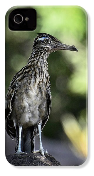 Greater Roadrunner  IPhone 4 / 4s Case by Saija  Lehtonen