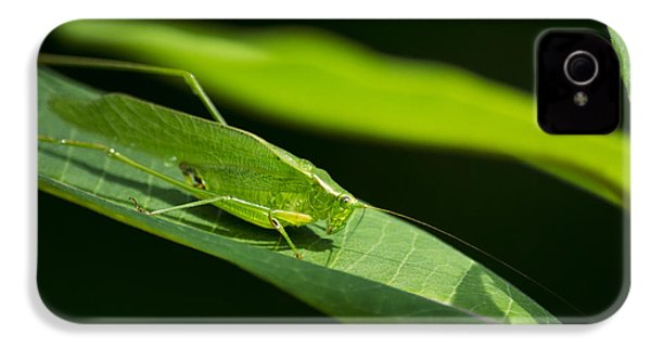 Green Katydid IPhone 4 / 4s Case by Christina Rollo