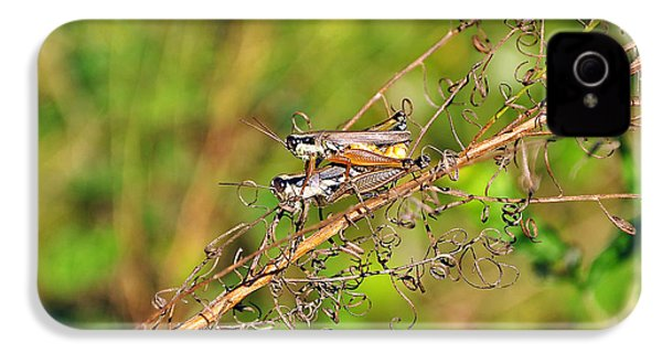 Gregarious Grasshoppers IPhone 4 / 4s Case by Al Powell Photography USA