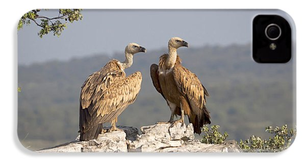 Griffon Vulture Pair Extremadura Spain IPhone 4 / 4s Case by Gerard de Hoog