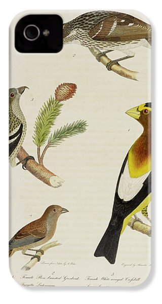 Grosbeak And Crossbill IPhone 4 / 4s Case by British Library