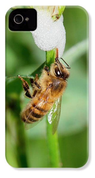 Honey Bee Drinking From Cuckoo-spit IPhone 4 / 4s Case by Dr. John Brackenbury