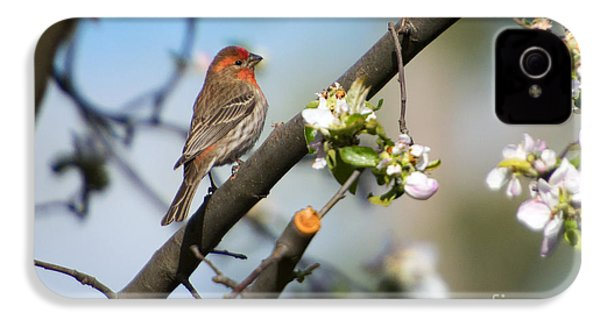 House Finch IPhone 4 / 4s Case by Mike Dawson