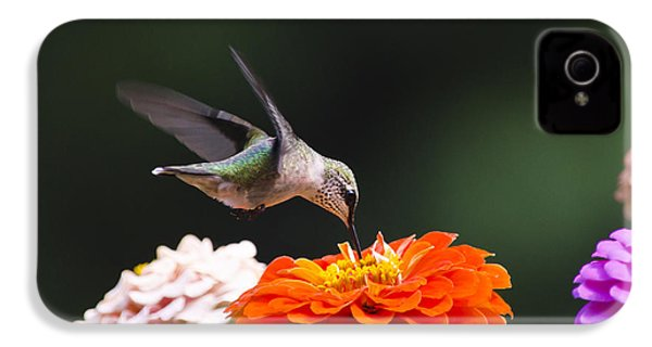 Hummingbird In Flight With Orange Zinnia Flower IPhone 4 / 4s Case by Christina Rollo