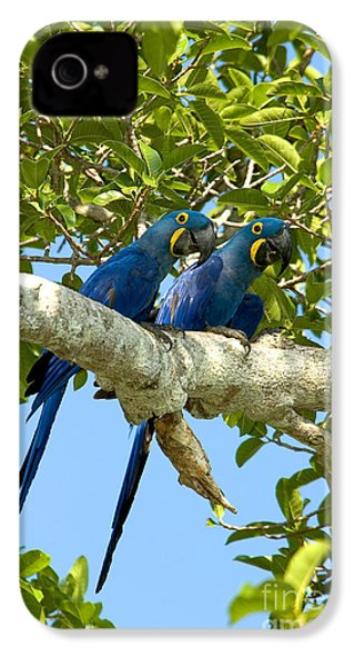 Hyacinth Macaws Brazil IPhone 4 / 4s Case by Gregory G Dimijian MD
