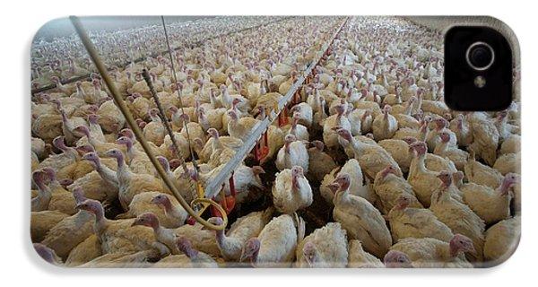 Intensive Turkey Farm IPhone 4 / 4s Case by Peter Menzel