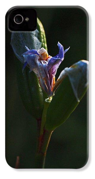 Iris Emerging  IPhone 4 / 4s Case by Rona Black