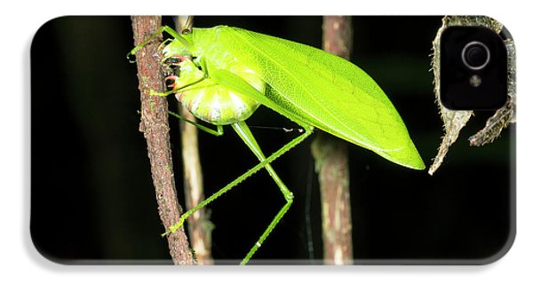 Katydid Laying Eggs IPhone 4 / 4s Case by Dr Morley Read
