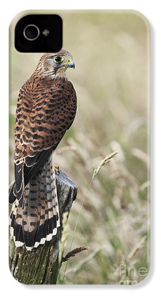 Kestrel IPhone 4 / 4s Case by Tim Gainey