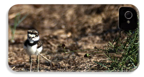Killdeer Chick IPhone 4 / 4s Case by Skip Willits