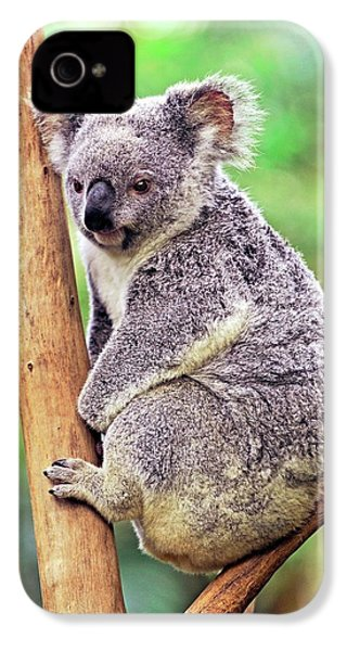 Koala In A Tree IPhone 4 / 4s Case by Bildagentur-online/mcphoto-schulz