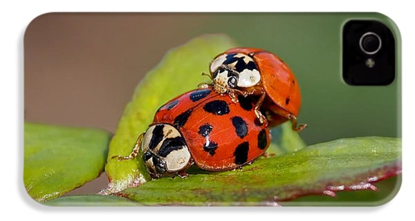 Ladybird Coupling IPhone 4 / 4s Case by Rona Black