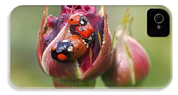 Ladybug Foursome IPhone 4 / 4s Case by Rona Black
