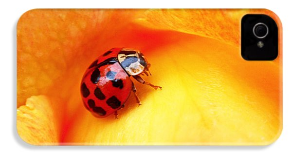 Ladybug IPhone 4 / 4s Case by Rona Black