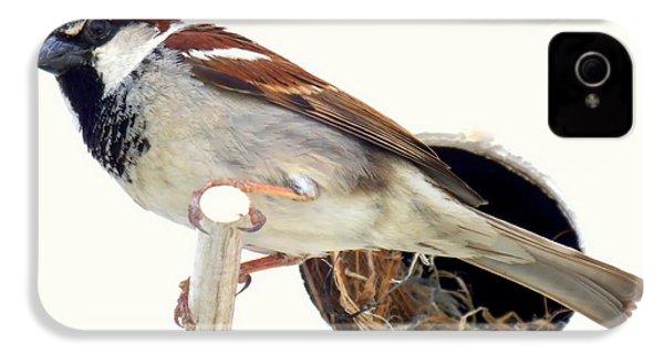 Little Sparrow IPhone 4 / 4s Case by Karen Wiles