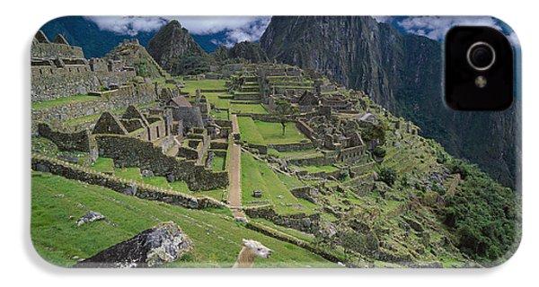 Llama At Machu Picchus Ancient Ruins IPhone 4 / 4s Case by Chris Caldicott