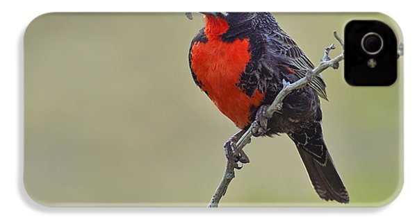 Long-tailed Meadowlark IPhone 4 / 4s Case by Tony Beck