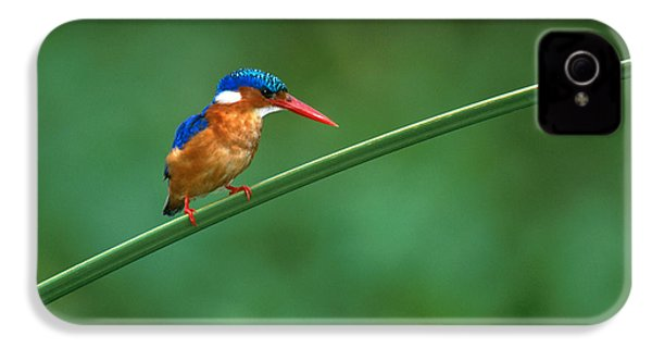 Malachite Kingfisher Tanzania Africa IPhone 4 / 4s Case by Panoramic Images