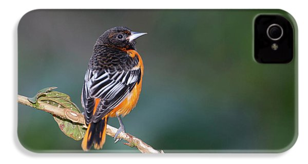 Male Baltimore Oriole, Icterus Galbula IPhone 4 / 4s Case by Thomas Wiewandt