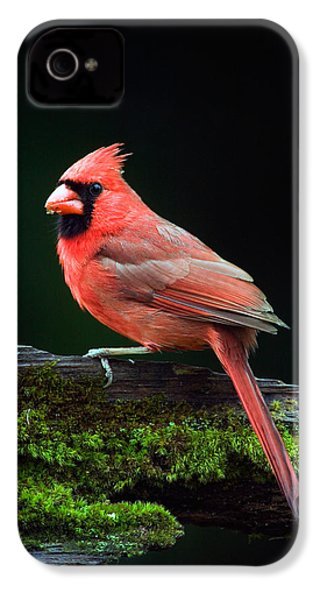 Male Northern Cardinal Cardinalis IPhone 4 / 4s Case by Panoramic Images