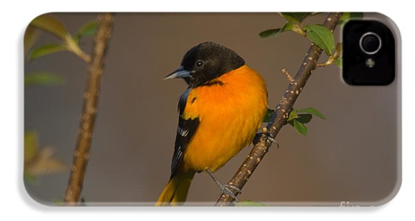 Male Northern Oriole IPhone 4 / 4s Case by Thomas and Pat Leeson